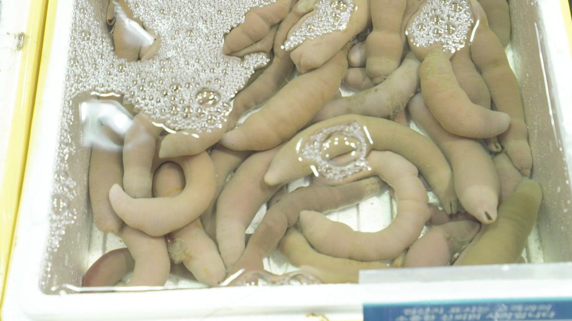 Et bilde av penis