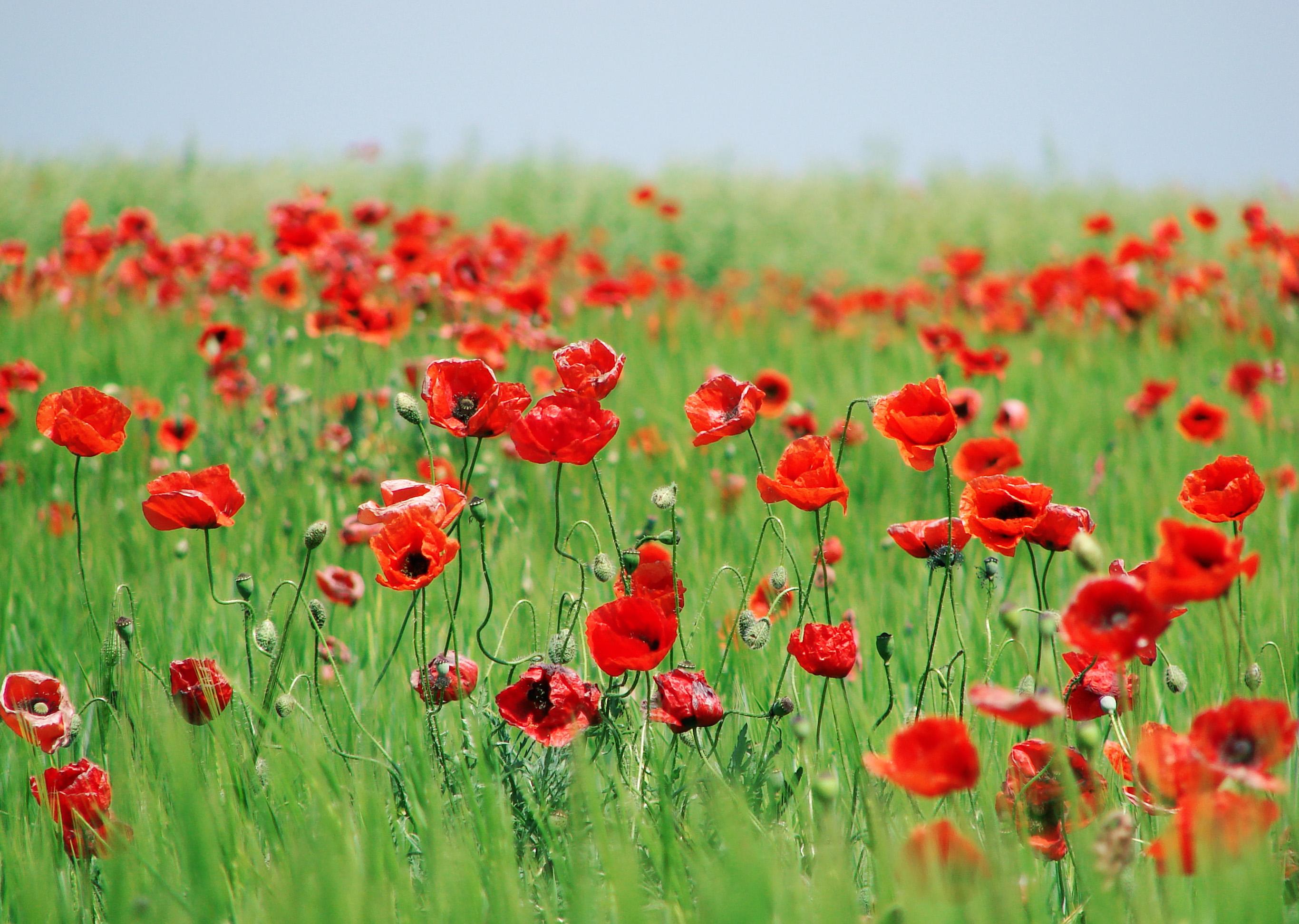 Bakomvalgvaka-bloggpost » blomster